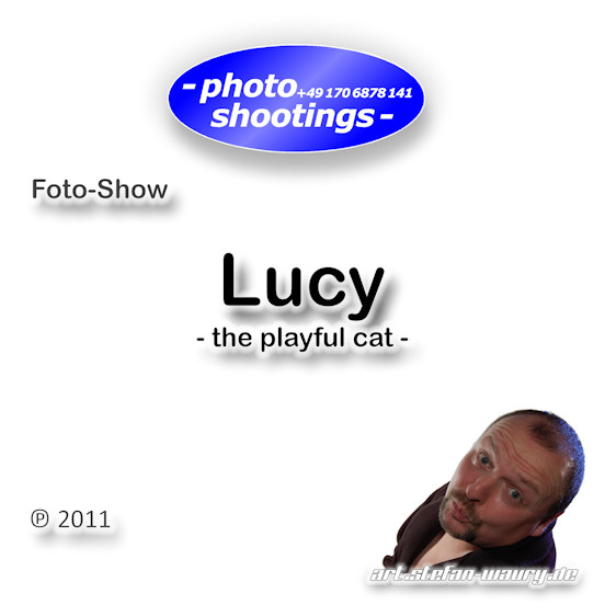 Foto-Show: Lucy... The Playful Cat